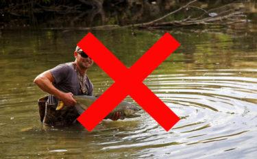 意外と知らない『国内外来魚』問題を解説 コイもメダカも外来魚?