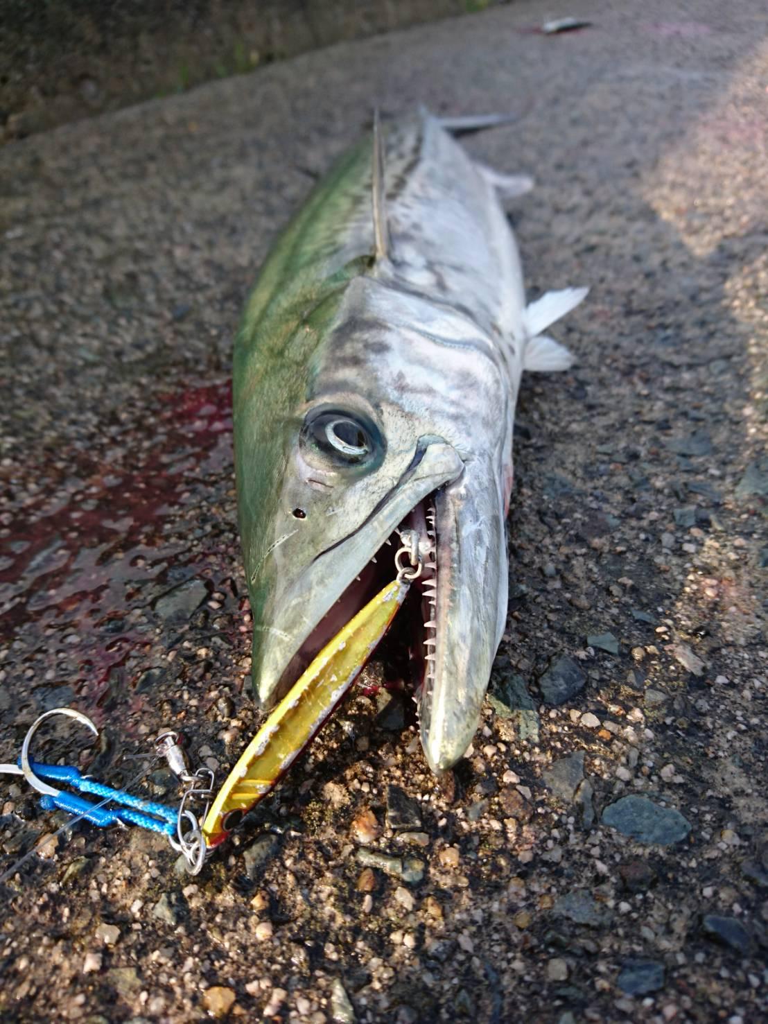 ルアーフィッシング初心者にありがちな魚をバラす4つの理由と対処法
