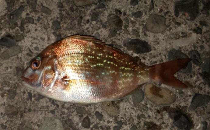 2日間連続投げ釣り釣行 キスのサイズ伸びずもゲスト多数【和歌山県】