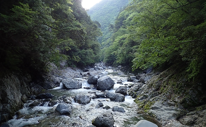 渓流ルアーゲームで24cm頭にアマゴ11匹 高活性ヒット頻発【奈良】