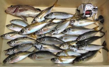 ボート釣りで25cm頭にアジ27尾 水温上昇で釣果アップ【神奈川県】
