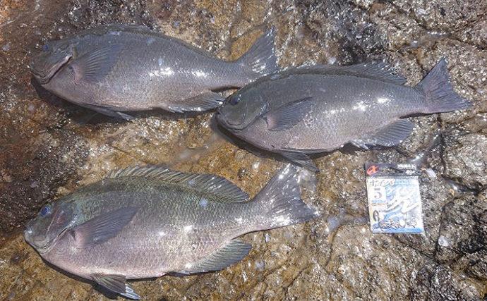 磯フカセ釣りで乗っ込みメジナ 足元でクロダイも【神奈川県・諸磯】