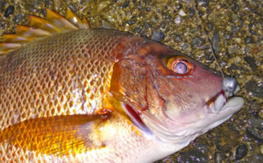 魚種も季節も問わない『ハイブリッド釣法』を解説 むしろ『禁じ手』?