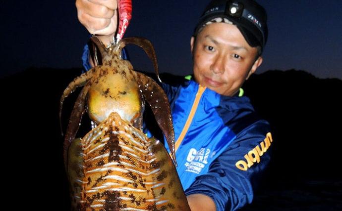 2日連続エギング釣行で1.5kgアオリ 藻の切れ間のボトムでヒット