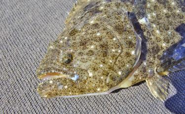 【青森県】全国の県魚を紹介:ヒラメ ご当地グルメはヅケ丼!