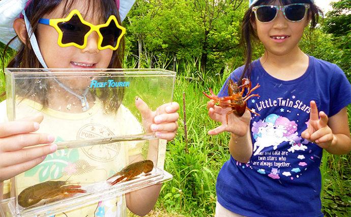 ザリガニ釣りのシーズン到来 肉の脂身がオススメエサ!【愛知県】