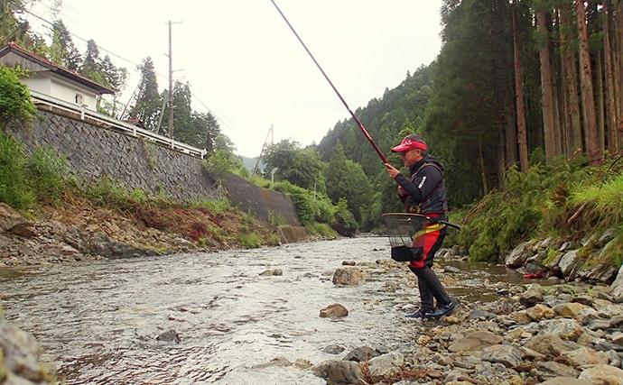 解禁日アユ友釣りで時速10匹達成 極細仕掛けがアタリ【京都・上桂川】