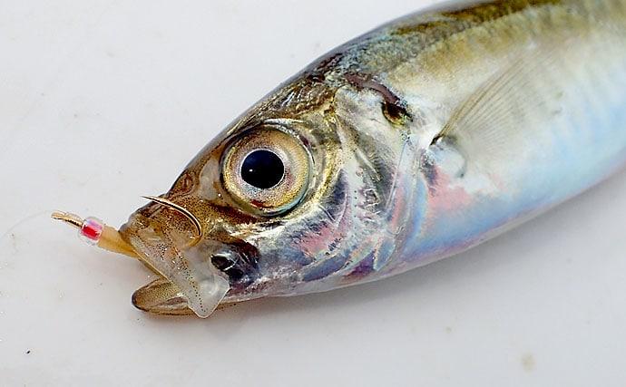 日中にもアジを釣るなら『投げサビキ』がオススメ マヅメは足元有利?