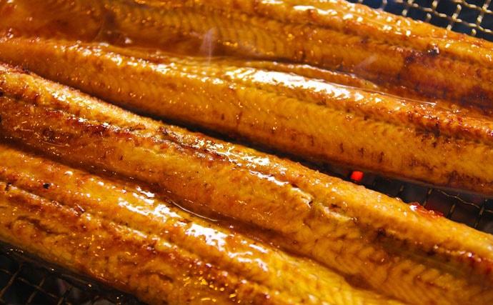 アナゴがウナギの代替品にならない理由 栄養素に大きな差