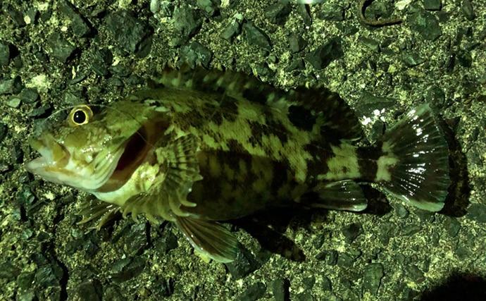 テレスコロッドで楽しむライトロックゲーム 夏の日本海は根魚天国!