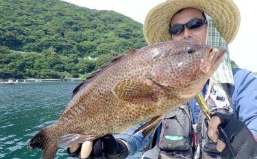 スーパーになかなか流通しない高級魚オオモンハタ(大紋羽太)を釣る方法
