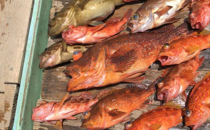 ライト泳がせ釣りで超美味ホウキハタ始め多彩釣果!【三重県・魚勘丸】