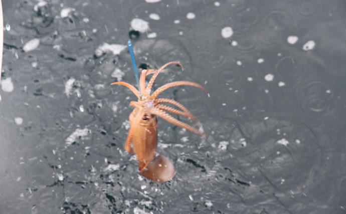 『直結式』での沖のイカ釣り入門 キホンを知れば初心者でも習得可能