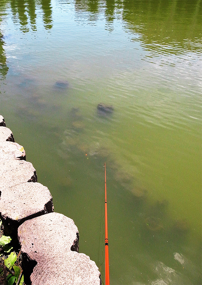 半日のテナガエビ釣りで15cm頭に本命26尾【埼玉県・別所沼公園】