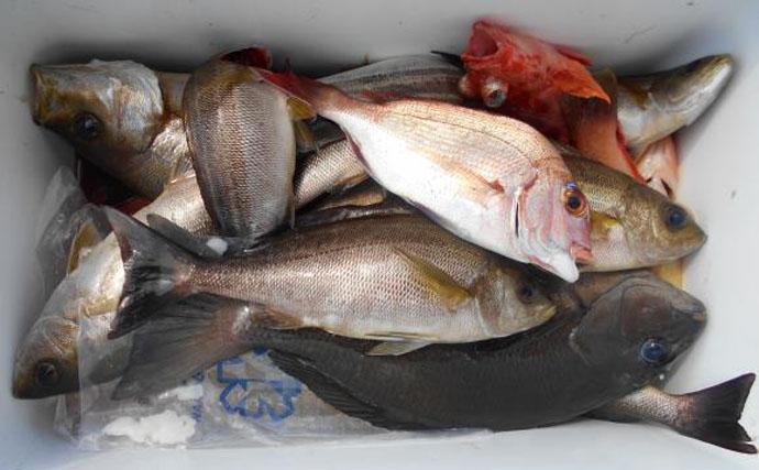 【大分・宮崎・熊本県】船釣り釣果速報 キャスティングでキハダマグロ