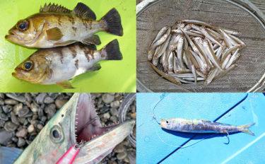 『春の季語』になっている魚4選 「鰯」は秋だけど「目刺」は春?