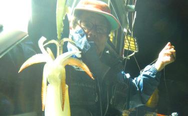夜焚きイカ釣行でパラソル級含みヤリイカ連掛け連発!【かつ丸】
