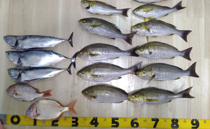 コマセイサキ釣りで良型 タナ10cmのズレが釣果に差【まつしん丸】