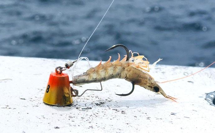 活きエビ『テンヤマダイ』釣行で本命にハナダイ&ホウボウも【不動丸】