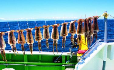 関東周辺スルメイカ釣り(ブランコ&直結)解説 投入~取り込みまで