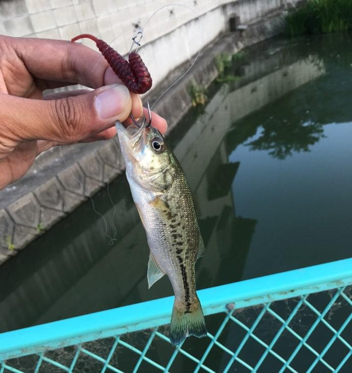 『野池』新規開拓で押さえるべきポイント3選 いよいよバス釣り最盛期!