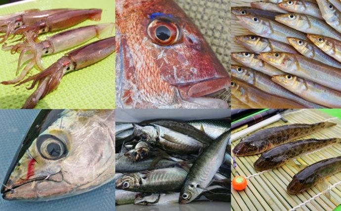 【関東エリア2019】編集部がこの夏にオススメする船釣り7選