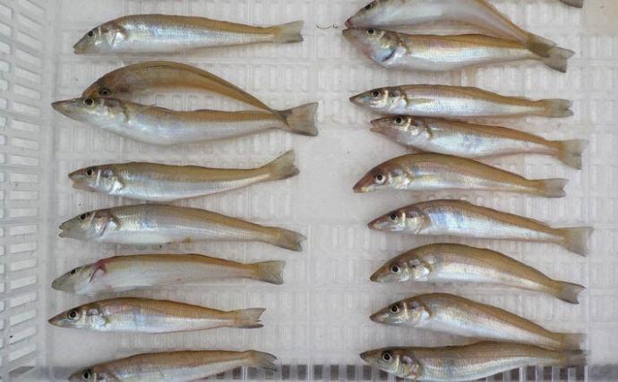2日間ボートシロギス釣りで40尾超え マイポイント発見!【兵庫県】