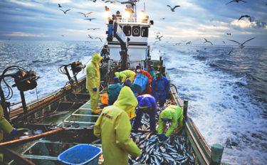 2019年サンマの漁獲量は過去最低 沿岸・遠洋・沖合漁業と今後の展望