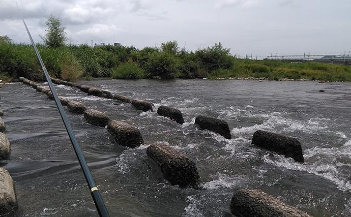 友釣りで『海産遡上』ファイターアユ狙い 線路近くはカワウも警戒?