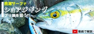 【動画あり】西湘サーフでのショアジギングで回遊中のブリ族を狙う ヒラメも登場!