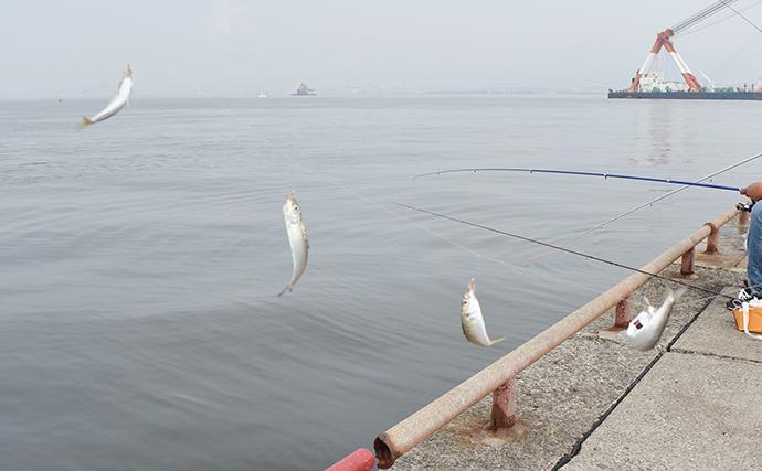 絶賛回遊中のアジ・サバ・イワシをサビキで釣ろう!【鳴尾浜臨海公園】