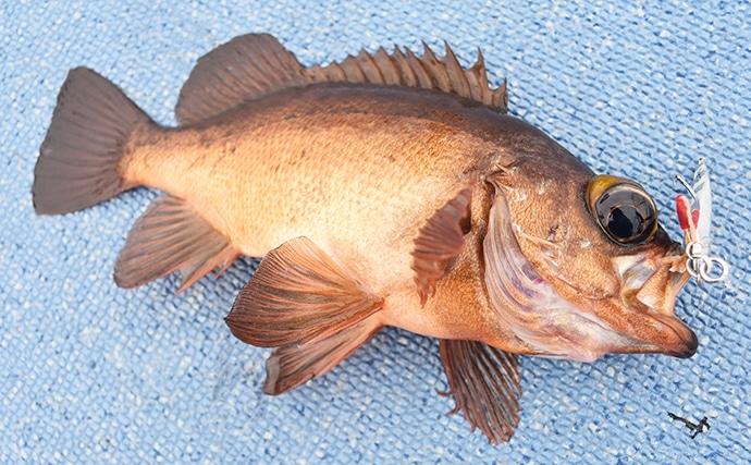 大人気『SLJ』で釣れる魚種をレア度別に紹介 紫の魚が一番珍しい?