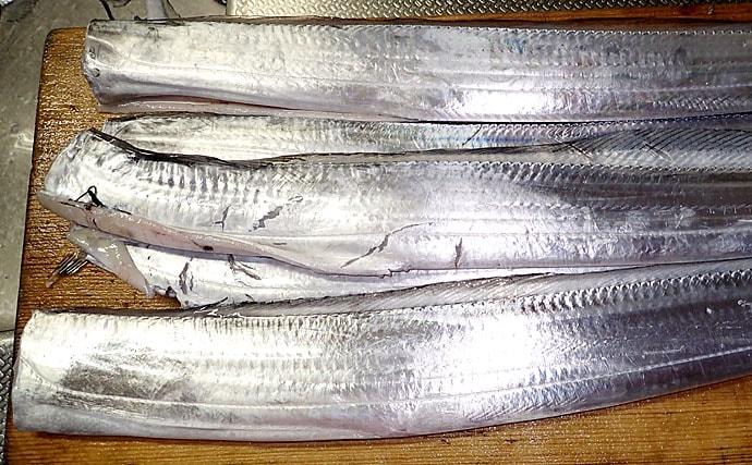 【釣果レシピ】小型タチウオのみりん干し 身の薄さがポイント!
