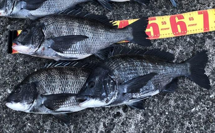 チヌ『紀州釣り(ダンゴ釣り)』での代表的な3つのウキ下パターン解説