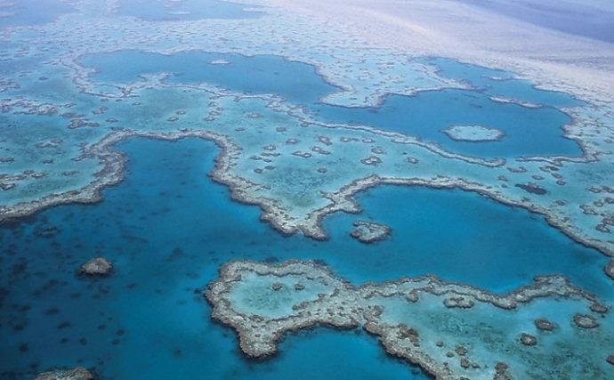 人類にとってのサンゴの役割りを解説 津波からも守ってくれる?