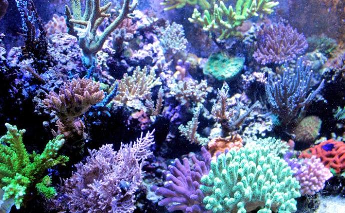 サンゴのちょっと変わった5つの生態 産まれたては泳ぐってホント?