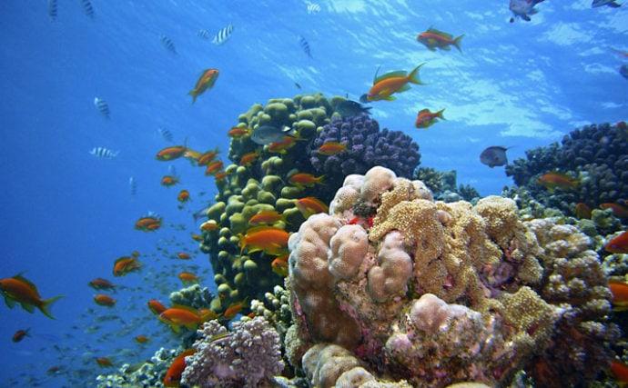海の生き物たちにとっての「海のオアシス」サンゴの重要な役割を解説