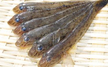 ハゼ釣りのメッカ『江戸川放水路』のボート&桟橋釣りを紹介【千葉県】