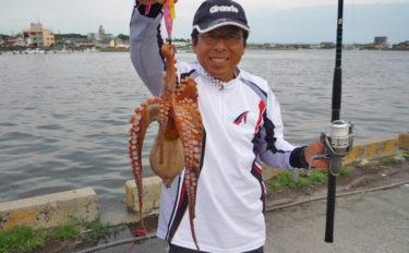 陸っぱりエギタコ釣りで900g頭に6匹の好乗り!【愛知県・常滑港】