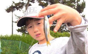 《夏休みオススメ2019》子連れ淡水釣りポイント紹介:酒匂川下流域