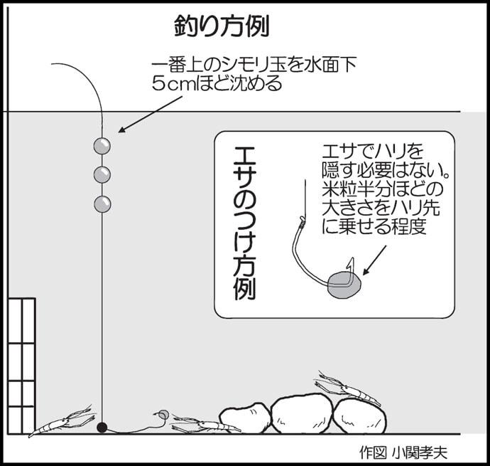 水温上がればテナガエビシーズン!2時間ほどで15尾【福岡県・泉川】