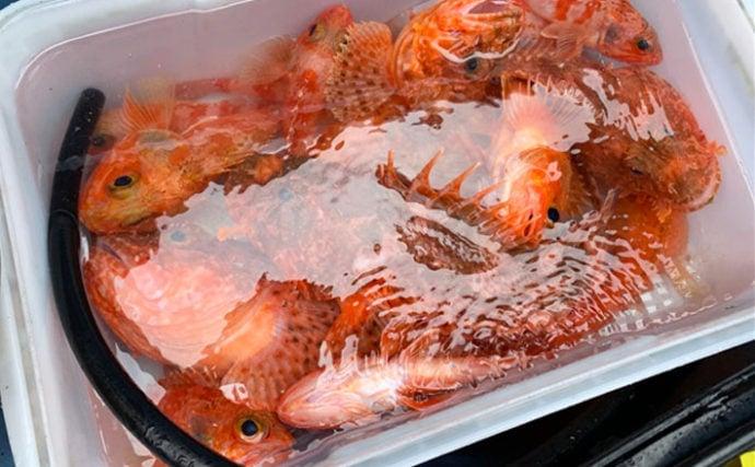 最盛期の外房オニカサゴ釣りで1.7kg頭に船中13尾!【千葉県】