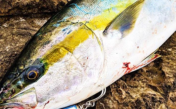 とにかく大きい世界最大記録8魚種 まさかの1,000kg超え登場?