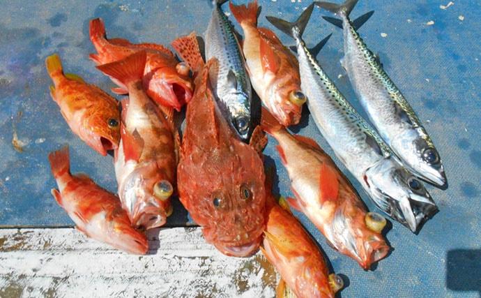 高級根魚狙いの中深場釣りで良型オニカサゴ【千葉県・第2二三丸】