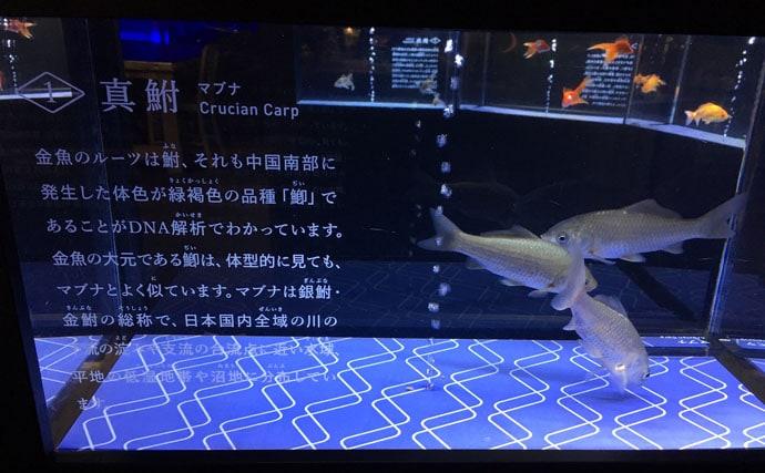 釣り人がついついしてしまう水族館での行動3選 捕食に異常な興味が?