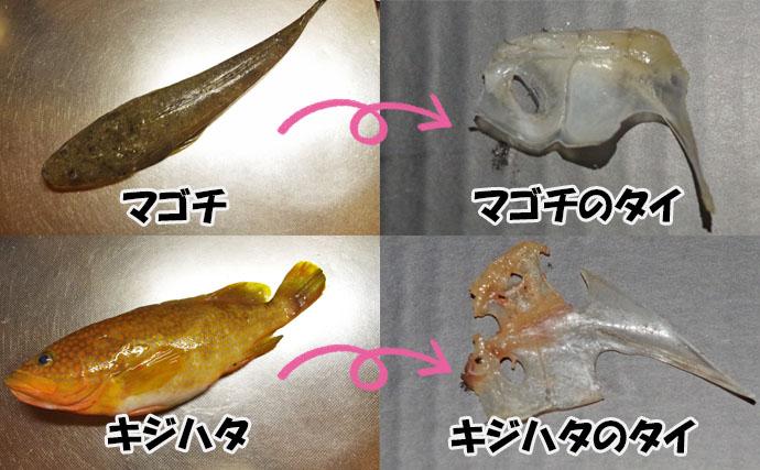 《夏休みオススメ2019》自由研究に最適の『タイのタイ(鯛中鯛)』