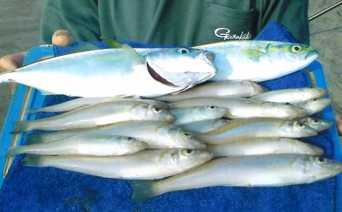 投げキス釣りで15~21cm本命シロギス15尾【千葉県・三島海岸】