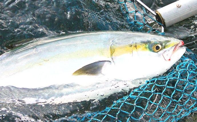 【東京湾2019】コマセワラサ釣りキホン解説 トップ10尾の釣果も
