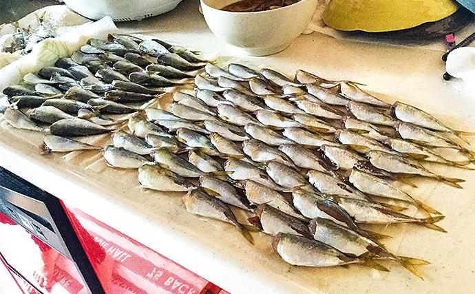海釣り施設でファミリーフィシング アジ入れ食い!【脇田海釣り桟橋】