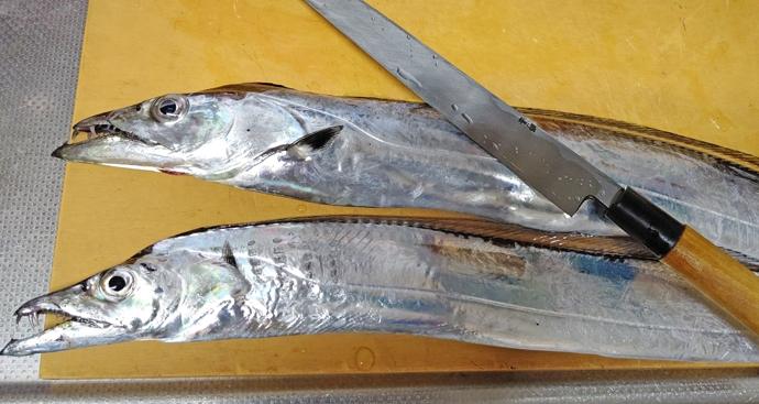 【釣果レシピ】タチウオの『たちまぶし』 サラっと食べれて夏バテ対策にも